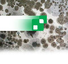 XSpor Life Sciences -- Biotech vs Mold